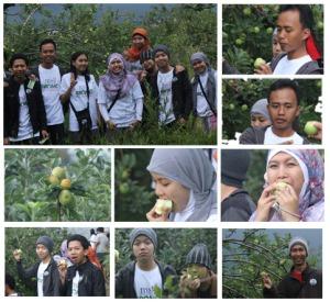 petik_apel_trip_malang